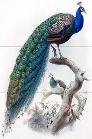 See more ideas about ceramic birds, clay ceramics, ceramic sculpture. Tile Mural Bird Peacock Kitchen Bathroom Wall Backsplash Tropical Tile Murals By Flekmanart Houzz