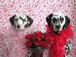 Valentines Day Background Dog ...