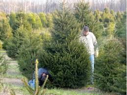 Where Are The Christmas Tree Farms Hereu0027s A List  Red Bank NJ PatchChristmas Tree Cutting Nj