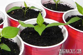 8 recycled seed starting containers for