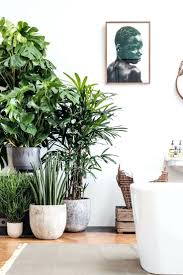 large house plants indoor for that dont need sun london