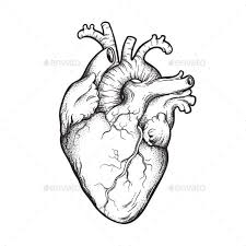 In drawing from this book, copy the last diagram, or finished picture, of the particular series. Human Heart Line Art And Dotwork Human Heart Drawing Human Heart Tattoo Anatomical Heart Art