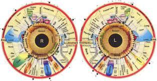 Rayid Iridology What It Chart Why It Iriscope