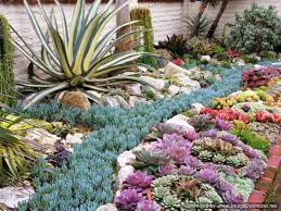 well known succulents garden ideas unique succulent gardens arrangements gd04