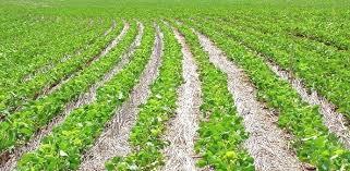 Image result for Preços mínimos para culturas de verão já estão em vigor
