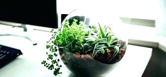 small plants for office. Office Small Plants For