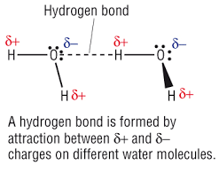 Hydrogen Bonding Hydrogen Bond It Is Represented By Dotted Lines