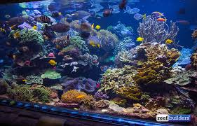 long island s 20 000 gallon reef tank is still one of the best displays in the world