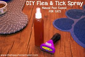 diy flea tick spray for cats thehippyhomemaker com