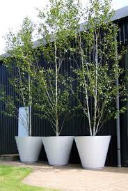 Best Landscape Design In Miami South FloridaGood Trees For Backyard