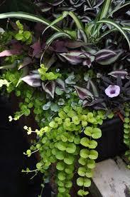 Container Garden Shade Plants