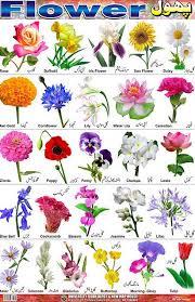 gallery of a touch blue bulbs for flower garden bulb blog expert types trending 10 bulb flower types a76