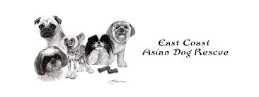 East coast asian rescue virginia