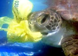 silent killers the danger of plastic bags to marine life ecowatch