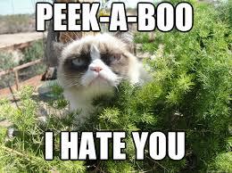 10 Tard Cat Memes You Probably Know Already | 10Awesome.com via Relatably.com