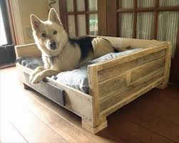 raised dog bed outdoor