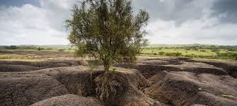 soil erosion must be stopped to save