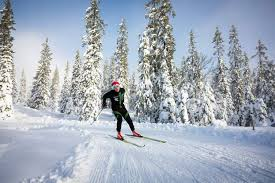 Bilderesultat for skiløper