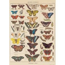 Details About French Butterfly Nature Chart Vintage Style Poster Decorative Paper Ephemera