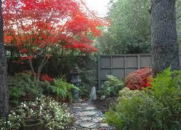 plant profile japanese maple houzz nz