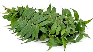 Image result for neem plant