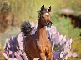 chestnut arabian horse wallpaper. Exellent Wallpaper Arabian Horse Foal 1280x1024 On Chestnut Wallpaper