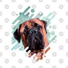 Bullmastiff Size Chart Bullmastiff Dog