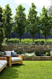 Designer Trees For Small Gardens Fence Line Ornamental Pear Jasmine And Grass Backyard