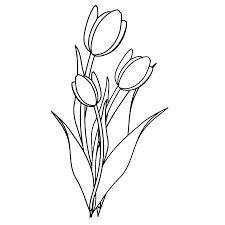 Luxe Kleurplaat Tulp Bloemen Krijg Duizenden Kleurenfotos Van De