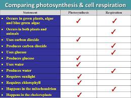 Topic 5 Cellular Energy Ppt Video Online Download
