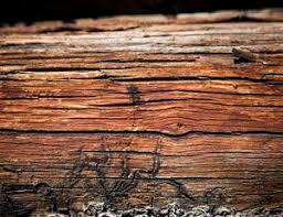 Image result for check for termite infestation