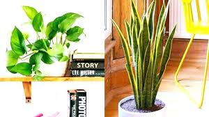 low maintenance office plants. Small Indoor Plants That Can Improve Your Office Environment Best Low Maintenance Easy Care Interior Houseplants A