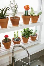Fensterbank Regal Für Kakteen Und Sukkulenten Indoor Plants Herb