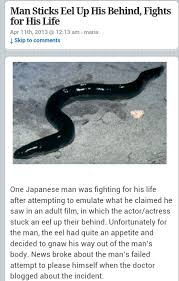 Japanese eels in ass