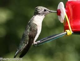 cedar works planter hummingbird feeder 2 feeders nectar hummer flower basket 2 3 3