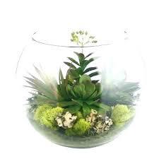 plants in glass bowl terrarium bowls best terrariums images on succulents house fish 3 min supplies hanging plants glass plant bowl