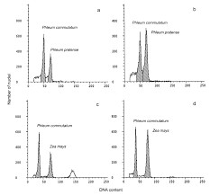 cytomorphological studies on american and european phleum ...