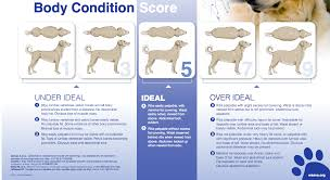 Dog Body Condition Scoring Chart Dr Justine Lee Dr