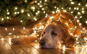 Animals In Christmas Lights Gog Christmas Lights New Year Wallpaper 2560x1600