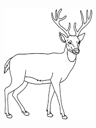 Small Picture Deer Coloring Pages coloring 2 Pinterest Alphabet crafts