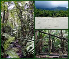 Interesting tropical rainforest biome facts: Rainforest Mission Biomes