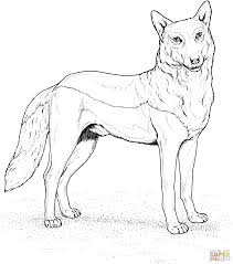 Red Wolf Coloring Pages Little Riding Hood Stirring Printable Free