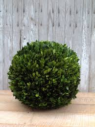 Order wholesale Preserved Boxwood Balls 16