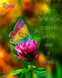 beautiful butterfly pictures with quotes. Brilliant Pictures Pin By Shrek Izzuddin On Rumi Quotes  Pinterest Quotes Wisdom And  Jesus Quotes To Beautiful Butterfly Pictures With U