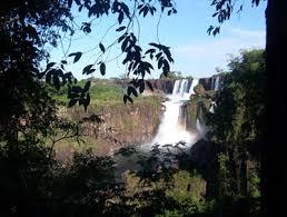saving the rainforest teen essay about endangered extinct species saving the rainforest