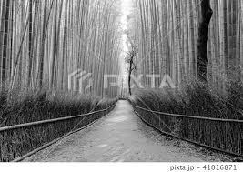 竹 竹林 垣根 生垣の写真素材 Pixta