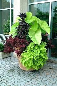oriental flower pots oriental plant pots garden plant containers bold foliage plants in a large pot oriental flower pots