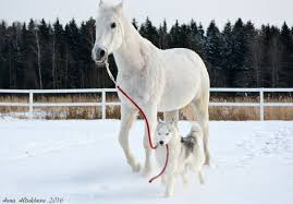 アルビノ種の犬と馬の動物壁紙