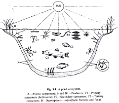 Producers And Consumers Venn Diagram Pond And Lake As Ecosystem With Diagram