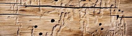termite damaged wood in a greenville sc home